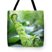 Fiddleback Fern Plant Unfurling In Springtime Tote Bag