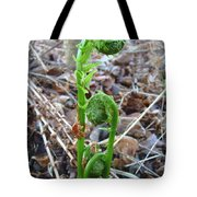 Fiddlehead Ferns In Spring Tote Bag