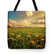 Field Of Dandelions At Sunset Tote Bag