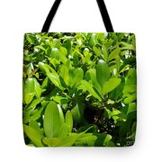 Field Of Green Tote Bag
