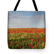 Field Of Red Poppy Anemones Late In Spring  Tote Bag