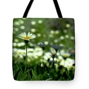 Field Of White Daisies Tote Bag