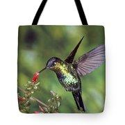 Fiery-throated Hummingbird Panterpe Tote Bag