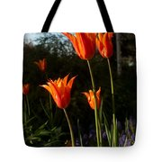 Fiery Tulips Tote Bag
