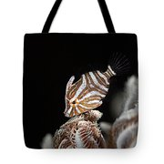 File Fish Tote Bag