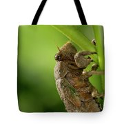 Final Instar Of A Cicada Emerging From The Ground To Molt On A L Tote Bag
