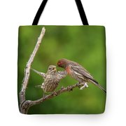 Finch Feeding Time I Tote Bag