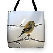 Finch On Frosty Perch Tote Bag