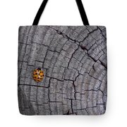 Find A Warm Spot Tote Bag by Guy Ricketts