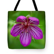Finding Truth In Nature Tote Bag
