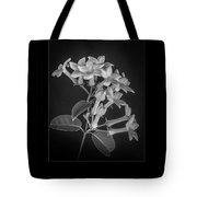 Fine Art Framed Study Of Estephanotis- Tote Bag