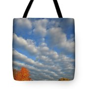 First Light On Glacial Park Sugar Maples Tote Bag
