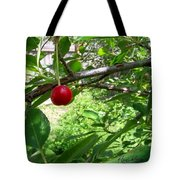 First Of The Season Tote Bag by Deleas Kilgore
