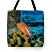 Fish On Coral Tote Bag
