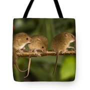 Five Eurasian Harvest Mice Tote Bag