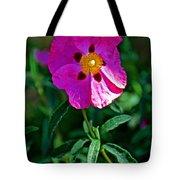 Orchid Rock Rose At Pilgrim Place In Claremont-california  Tote Bag
