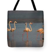 Flamingo During Sunset Tote Bag