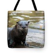 Flamingo Gardens - Curious Otter Tote Bag