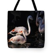 Flamingo Study - 2 Tote Bag