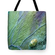 Flamingo Tongue Tote Bag