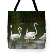 Flamingoes And Their Reflections Tote Bag