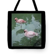 Flamingoes Posing Tote Bag