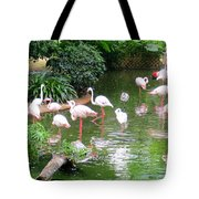 Flamingos 4 Tote Bag