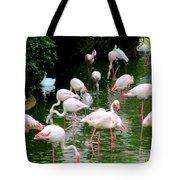 Flamingos 6 Tote Bag