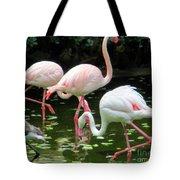 Flamingos 8 Tote Bag