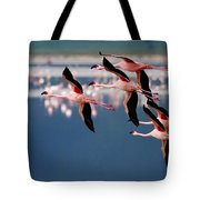 Flamingos In Flight-signed Tote Bag