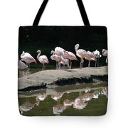 Flamingos With Reflection Tote Bag