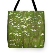 Fleabane In The Meadow Tote Bag