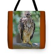 Fledgling Hawk Tote Bag