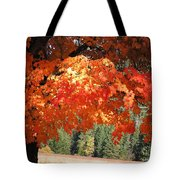 Flickering Sunlight Tote Bag