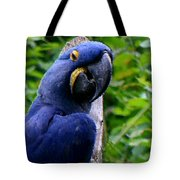 Flirty Birdy Tote Bag