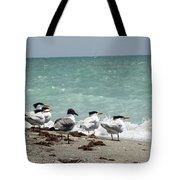 Flock Of Terns Gp Tote Bag