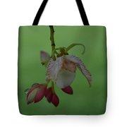 Flor De Tamarindo Tote Bag