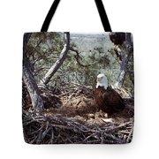 Florida: Bald Eagles, 1983 Tote Bag
