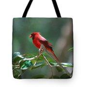 Florida Cardinal Tote Bag