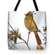 Florida Cardinal Tote Bag