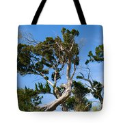 Florida Cedar Tree Tote Bag