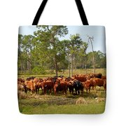 Florida Cracker Cows #1 Tote Bag