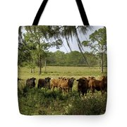 Florida Cracker Cows #3 Tote Bag