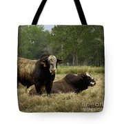 Florida Cracker Cows #4 Tote Bag