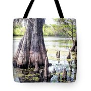 Florida Cypress, Hillsborough River, Fl Tote Bag