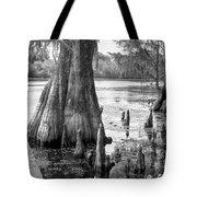 Florida Cypress, Hillsborough River, Fl In Black And White Tote Bag
