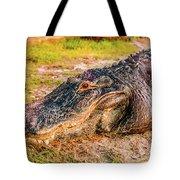 Florida Gator 1 Tote Bag