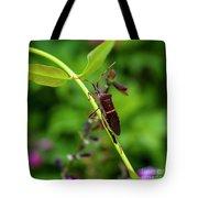 Florida Leaf-footed Bug Tote Bag