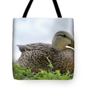 Florida Mallard Tote Bag