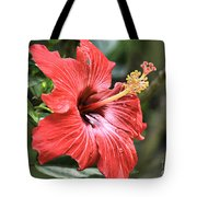 Florida Red Tote Bag